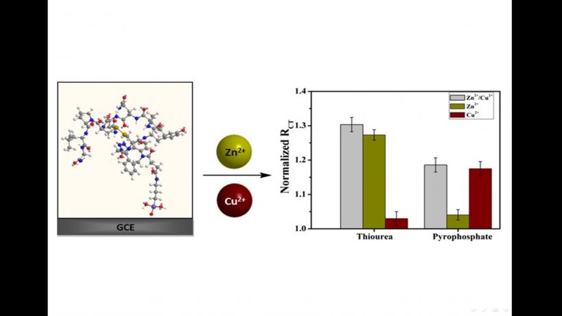 Oxytocin-Monolayer-Based Impedimetric Biosensor for Zinc and Copper Ions